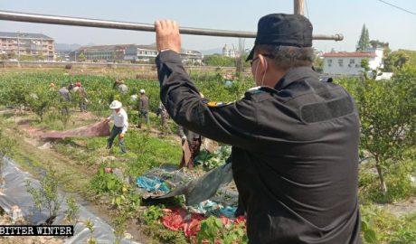 苍南县农民瓜架被毁