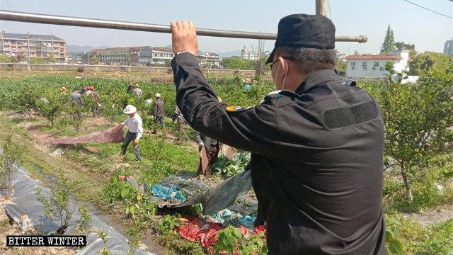 疫情间仍为面子断人民生计    中共暴力强拆养殖大棚、毁菜园
